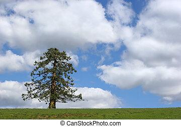 przedimek określony przed rzeczownikami, zimozielone drzewo