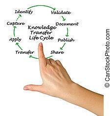 przelew, życie, wiedza, cykl