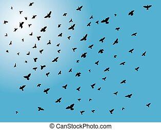przelotny, ptaszki