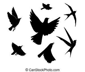 przelotny, ptaszki, sylwetka, na białym, tło, wektor, ilustracja