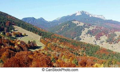 przelotny, truteń, nad, autumn drzewa, krajobraz