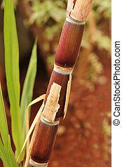 przemysłowy, dojrzały, jaggery, sugarcane, pełno, bio-fuel, ...