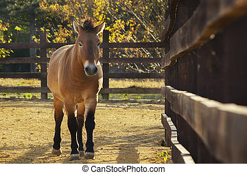 Horse in a front view horse head in a front view stock photographs przewalskis horse in the zoo autumn front view sciox Choice Image