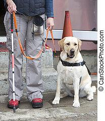 przewodnik, jej, pies, osoba, ślepy