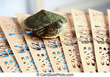 pseudemys, scripta, turtle.