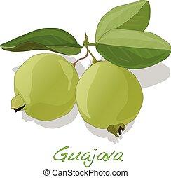 Psidium Guajava vector illustration