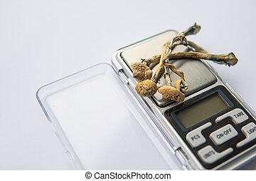 Psilocybin mushroom. Psilocybin Mushroom. Albino A strain. Dry Psilocybe cubensis. Close up Magic shroom. Psychedelic drug. White background.