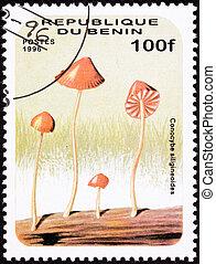 Psychedelic Mushroom, Conocybe siligineoides. Looks like it...