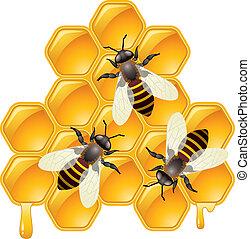 pszczoły, honeycells, wektor, pracujący