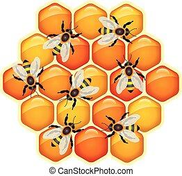 pszczoły, komórki, wektor, pracujący, plaster miodu