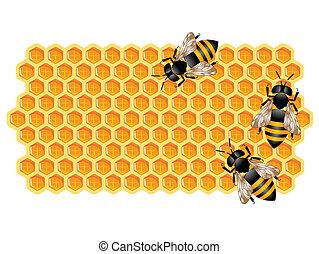 pszczoły, pracujący, plaster miodu