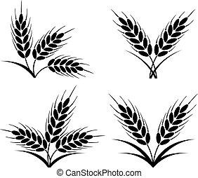 pszenica, żyto, grona, wektor, jęczmień, albo, kłosie