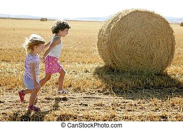 pszenica, dziewczyny, okrągły, zasuszony, bele,...