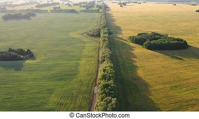 pszenica, field.the, na, przelotny, above.fhd, truteń,...