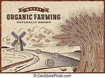 pszenica gospodarka, organiczny, krajobraz