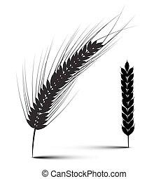 pszenica, odizolowany, ilustracja, wektor, tło, biały, kłosie