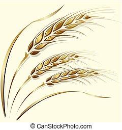 pszenica, ułożyć, róg, brzeg, albo, element., kłosie