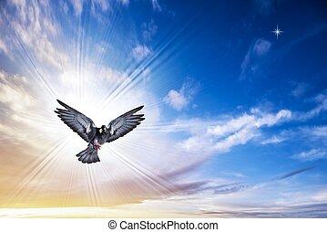 ptáček, anděl, nebe