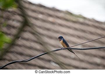 ptáček, doušek, telegram, sedění, -