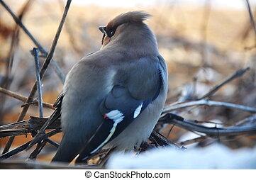 ptáček, filiálka