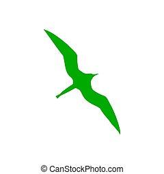 ptáček, fregata, grafické pozadí