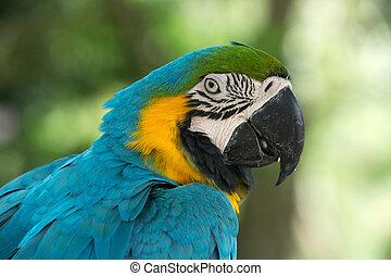 ptáček, papoušek