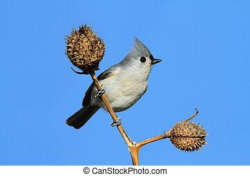 ptáček, tyč