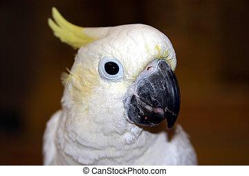 ptáci, #4