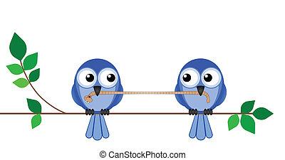 ptáci, oběd