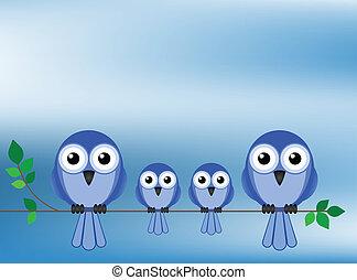 ptáci, rodina