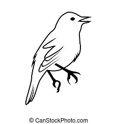 ptak, rys
