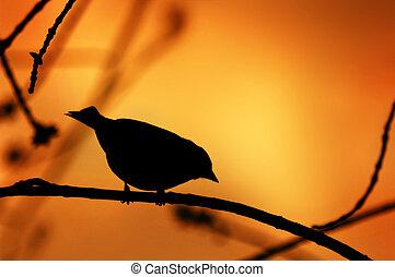 ptak, sylwetka, na gałęzi