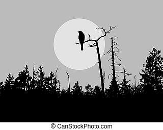 ptak, sylwetka, wektor, drzewo