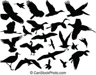 ptak, wektor, -, różny, zbiór