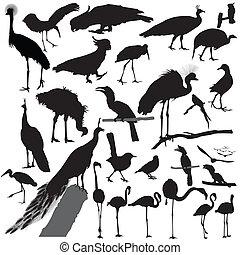 ptak, wektor, sylwetka, komplet