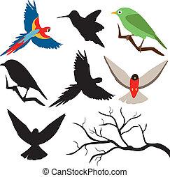 ptaszki, i, drzewo gałąź