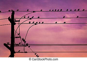 ptaszki, na, drut