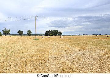 ptaszki, na, elektryczny drut, w, zagroda, field.