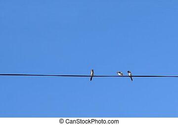 ptaszki, na, przedimek określony przed rzeczownikami, elektryczny drut