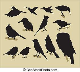 ptaszki