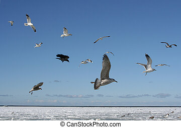 ptaszki, w, przedimek określony przed rzeczownikami, niebo