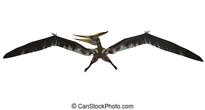 Pteranodon Flight on White - Pteranodon was a pterosaur from...