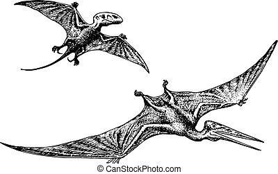 Pterodactyl or Pteranodon dinosaur flying on white...