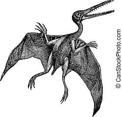 Pterodactylus or Pterodactylus antiquus vintage engraving -...