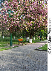 pubblico, sakura, giardino
