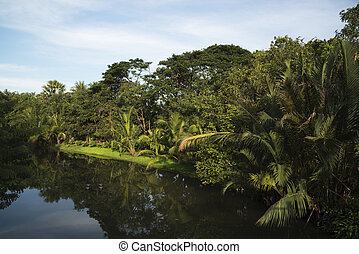 Pubic park on a sunny day - Coconut trees, grass near the...