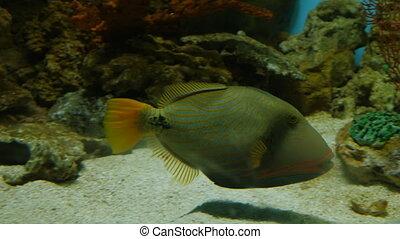 public, aquarium, fish