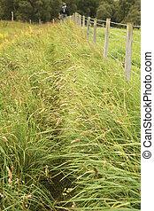 Public footpath near a fence - Tall grass on public footpath...