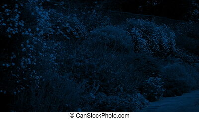 Public Gardens At Night - Many pretty plants and flowers in...