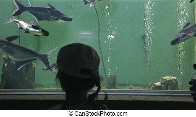 public, mère, girl, peu, aquarium